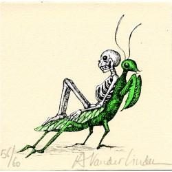Insecte 1