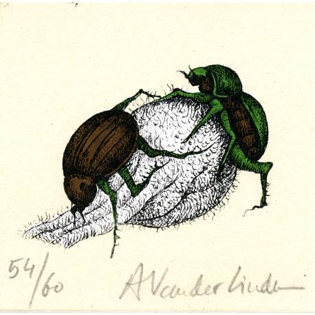 Insecte 2